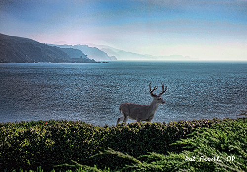 Deer on bluff at Bolinas