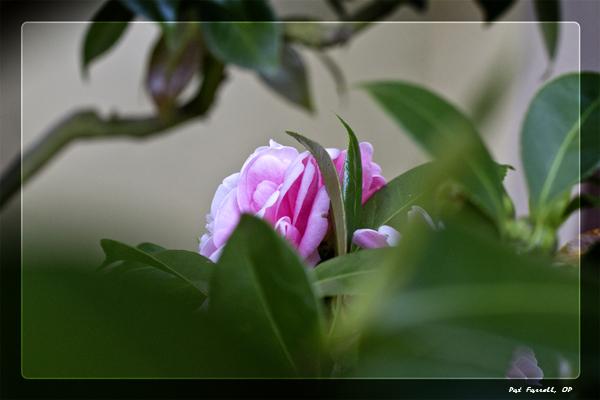 Daring to blossom