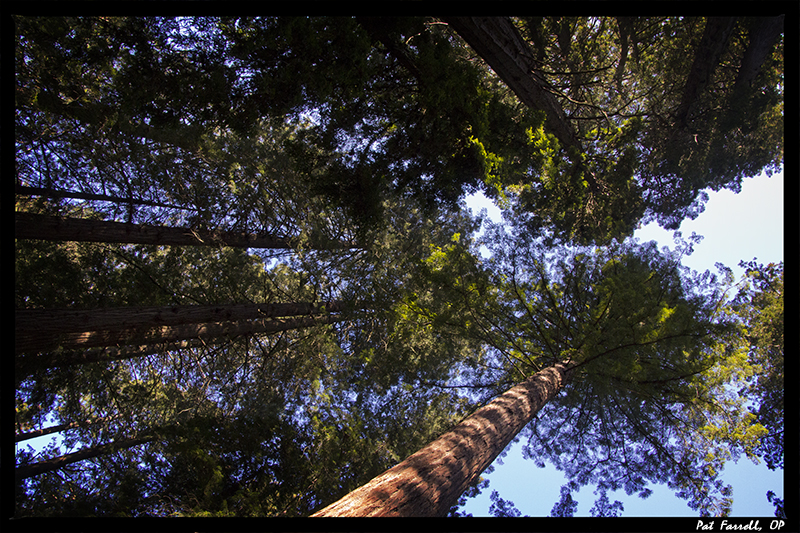 Without a doubt, the Redwood Trees in Muir Woods rejoice!