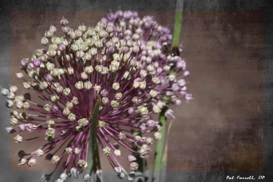 descanso_gardens_2011_080