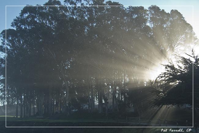 del_mar_sunlight