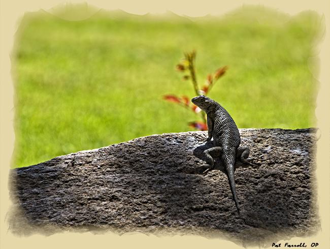 lonely_lizard
