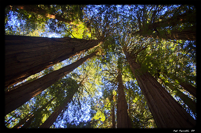 muir_woods_jan_2013_024