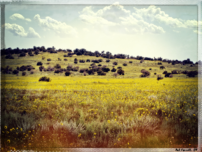 canyon_lands_field