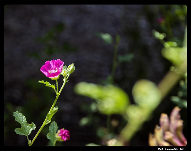 descanso_gardens_2011_007