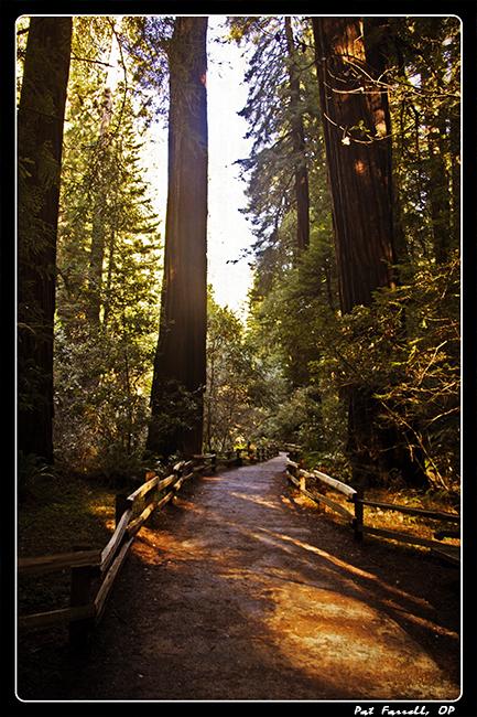 muir_woods_trail