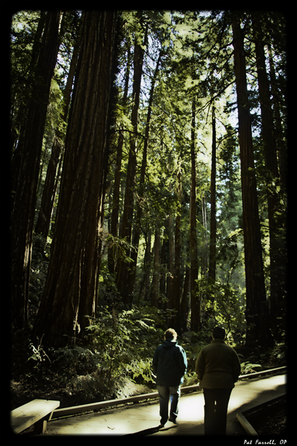 muir_woods_walkers