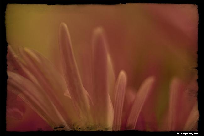 sr_flowers_feb_2013_067