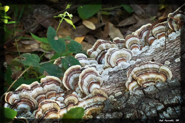 The tenacity of life, as fungus on a dead stump - away from bright sunlight