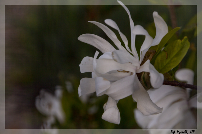 sr_spring_flowers_2013_031