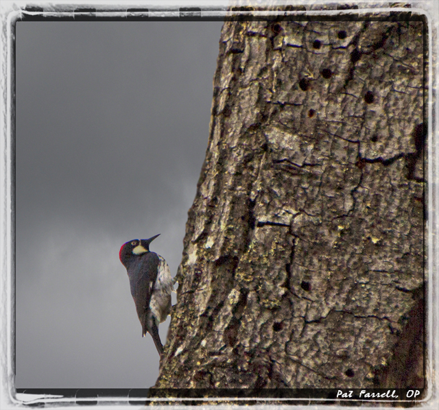 I listened to the woodpecker this morning when I awoke