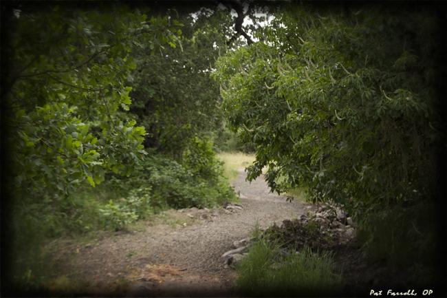 Walk the path slowly