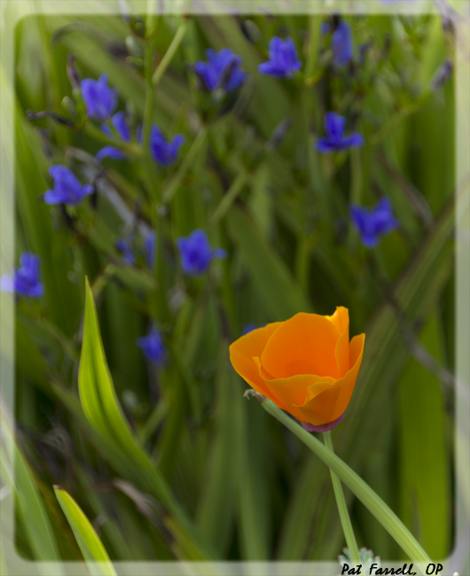 Every blade of grass - and every poppy and purple flower too!