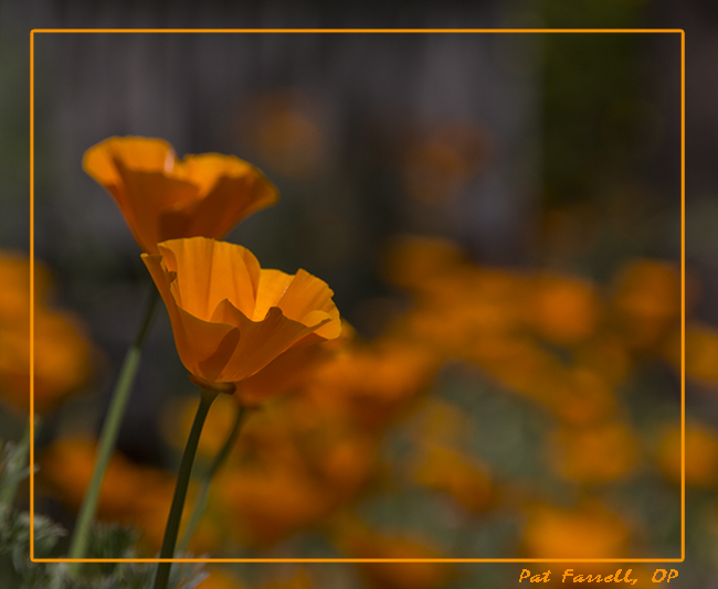 sr_march_flowers_2013_095