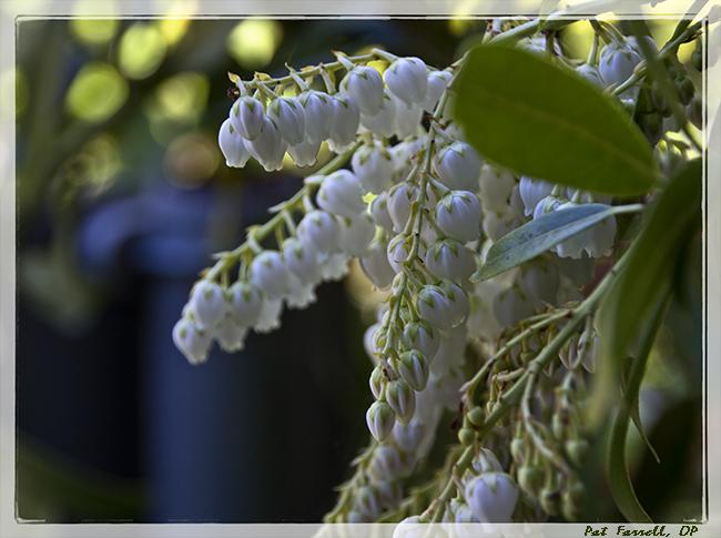 sr_march_flowers_2013_130