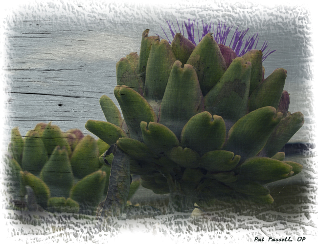 One wonders how the thistle was ever discovered to be edible! Is it anymore difficult to find God there?