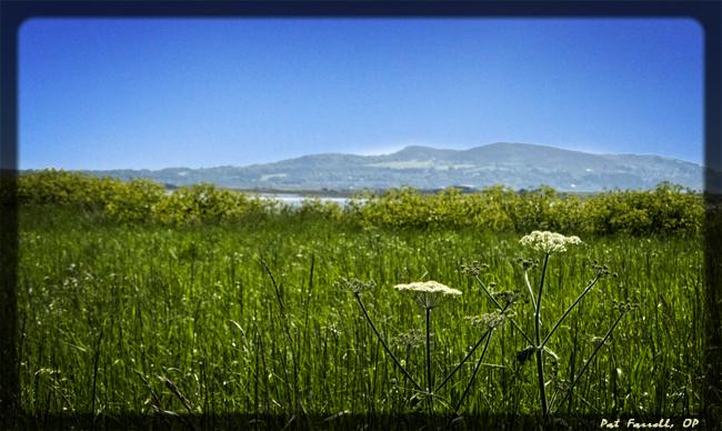 ireland_grass