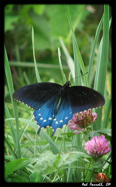 blueridge_51_2007_025