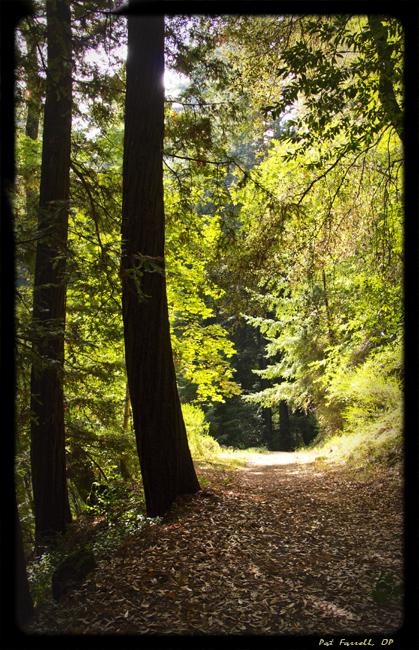 pres_ctr_los_gatos_trail