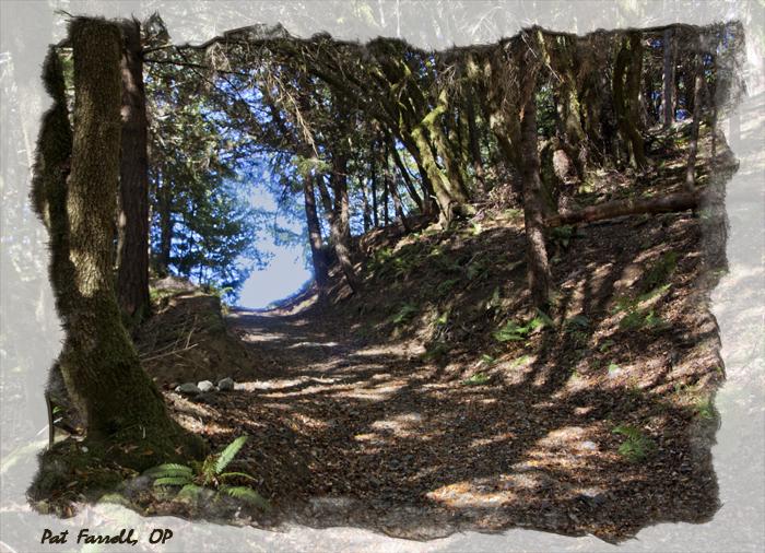 redwoods_monastery_path