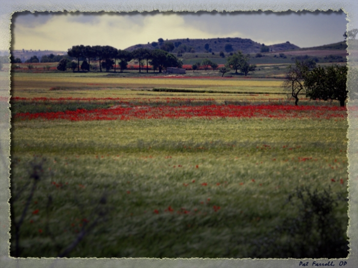 The Spanish countryside and bright red poppies, with which St. Teresa would have become well accustomed on her journeys