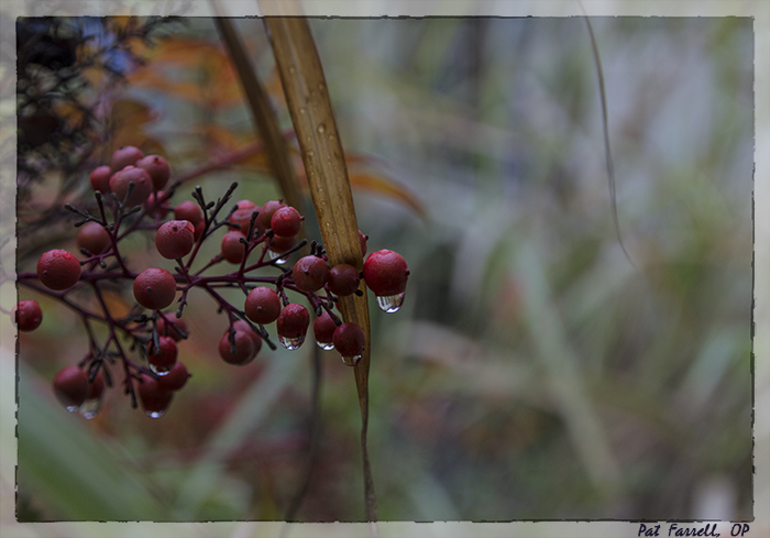 To be grateful for all . . . To be grateful for the dew and the berries.