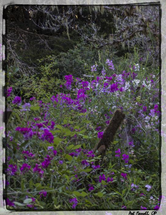 redwoods_monastery_2013_533