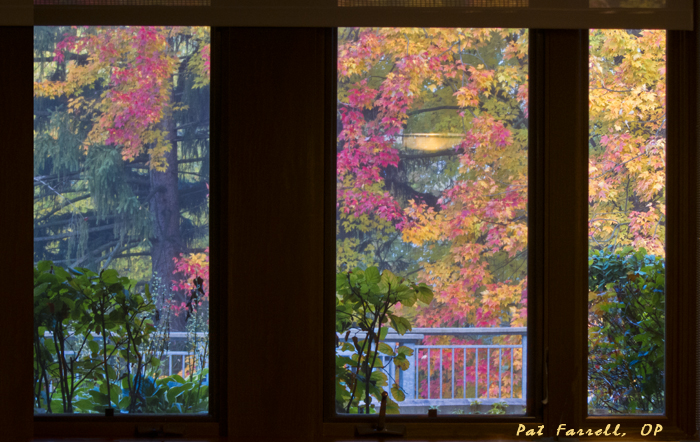 A beautiful autumn window in Adrian, Michigan