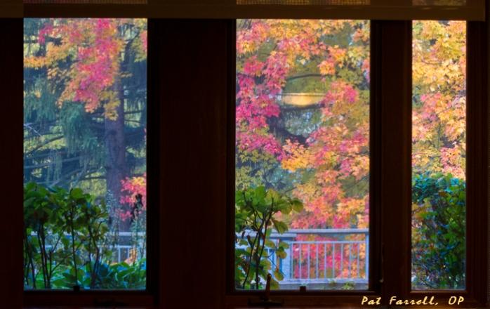 A beautiful autumn window in Adrian, Michigan
