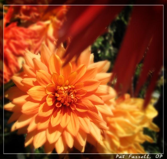 lima_sept-2006 019