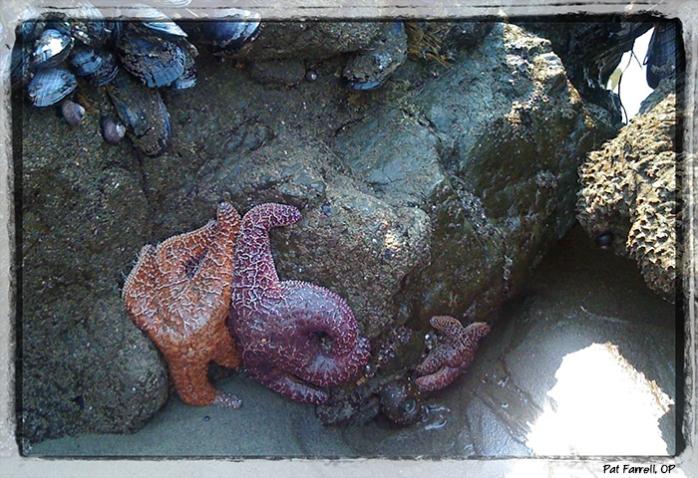 Starfish at Muir Beach