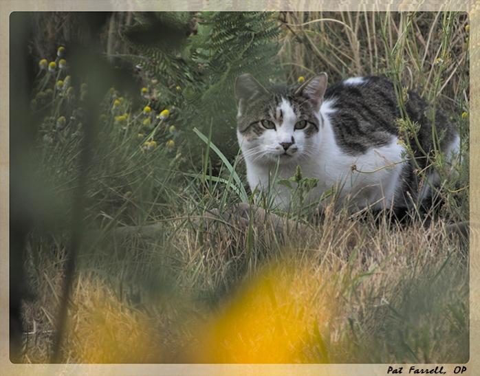 redwoods_cat
