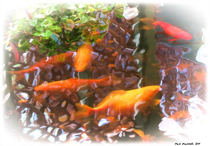My Thirsty Fish