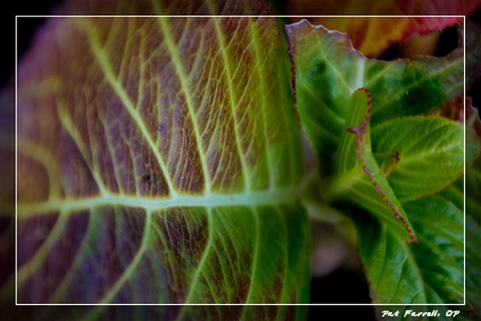bolinas_january_2012_134