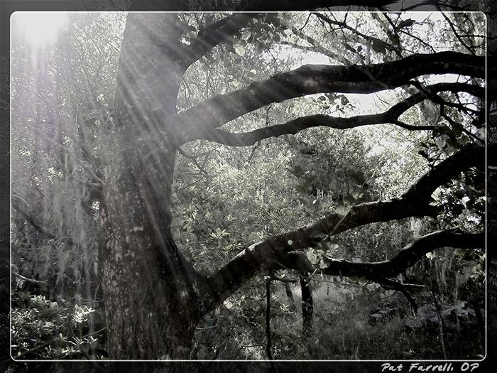 5-20_light_through_trees_3