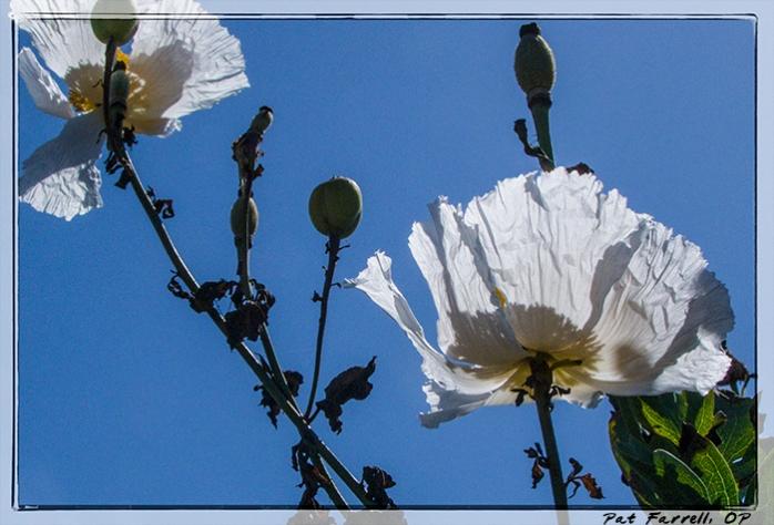 5-22_del_mar_council_2011_039