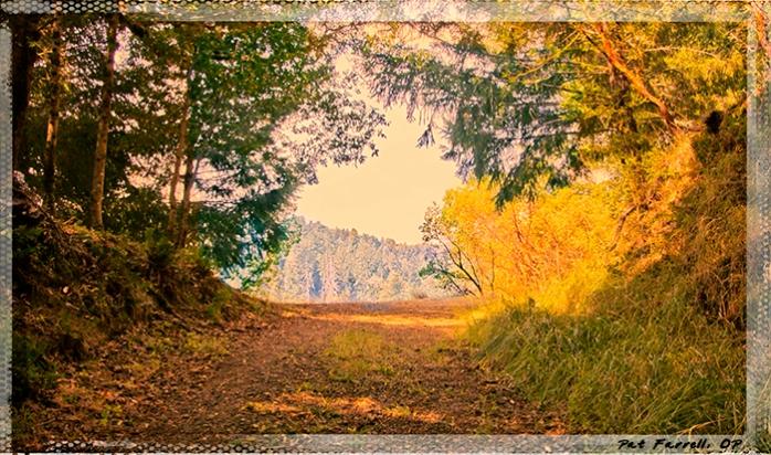 5-5_redwoods_monastery_2013_079