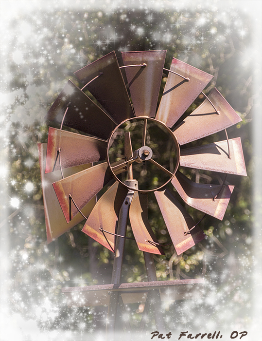 5-9_descanso_gardens_2011_082