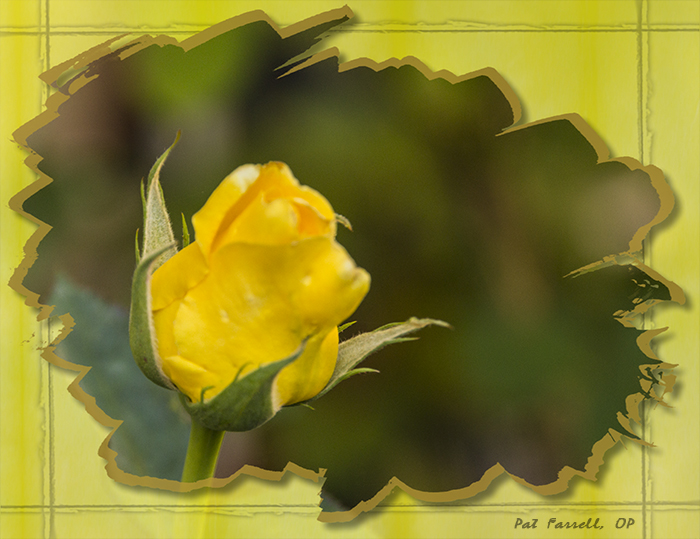 olmc_flowers_2011_053