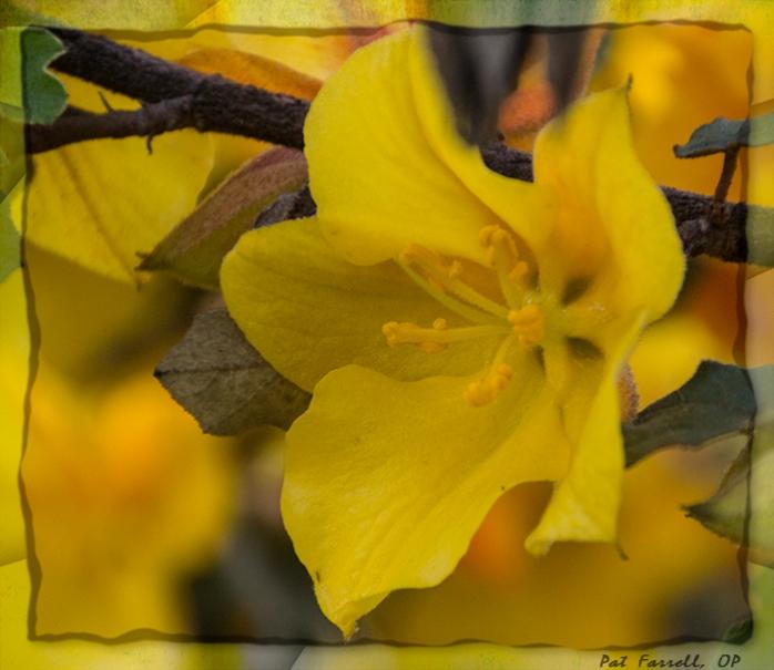 sr_flowers_april_2014_025