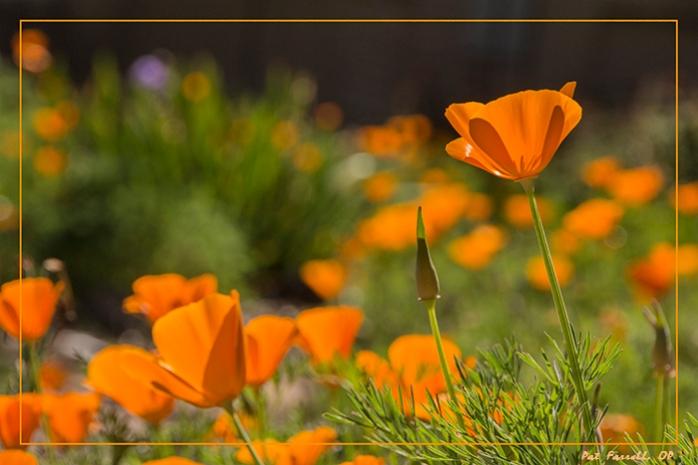 sr_flowers_april_2014_137