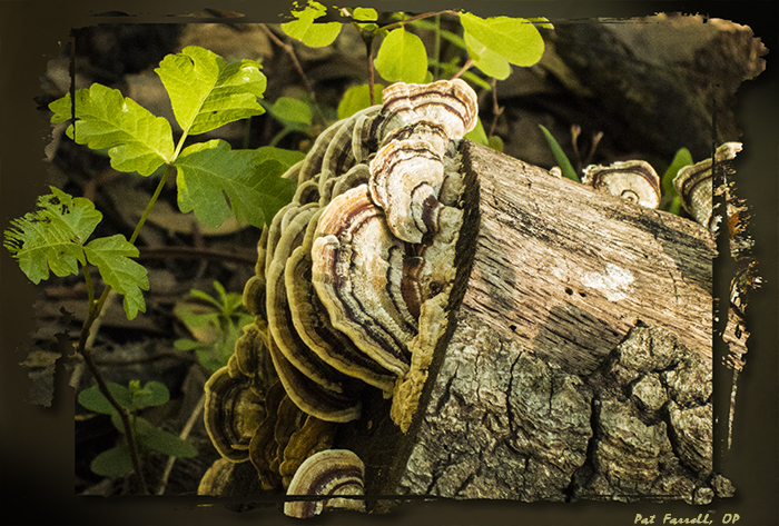 The marvelous bracket fungus