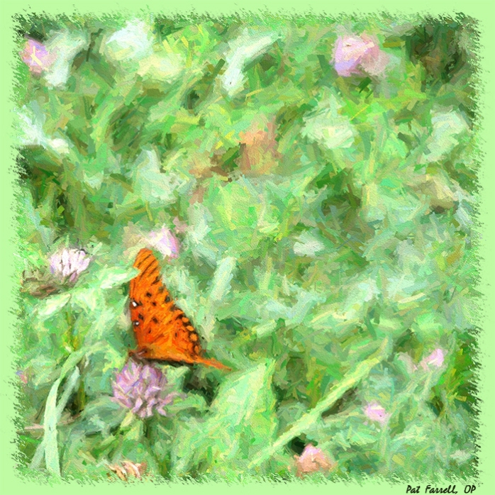 How much time does the butterfly or the clover have?