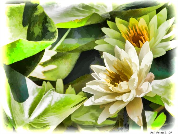 descanso_gardens_2011_019