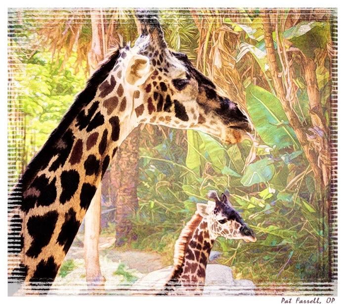 la_zoo_2011_094