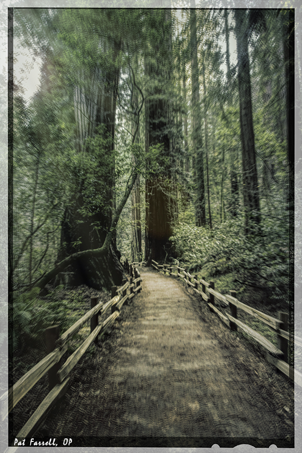 muir_woods_feb_2012_073
