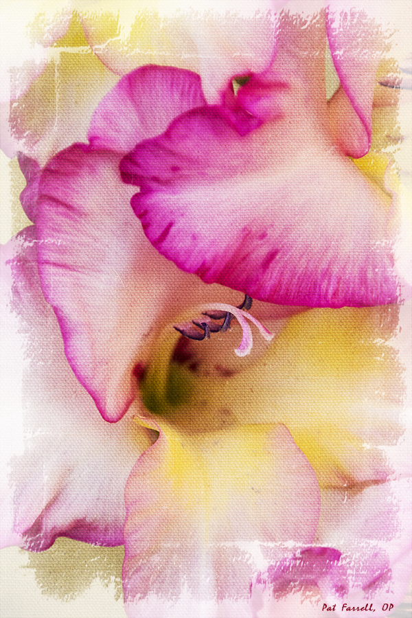 olmc_flowers_2011_038