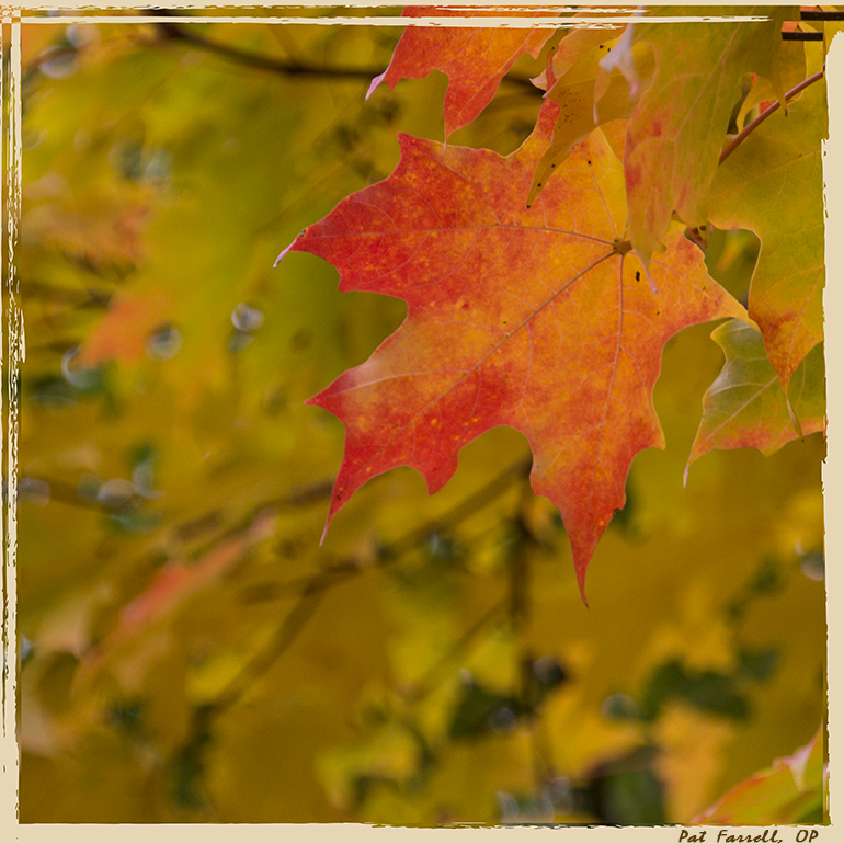 autumn_oak_park_2014_029