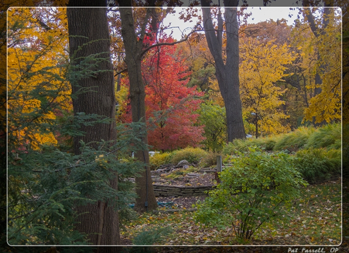 autumn_river_forest_2013_035