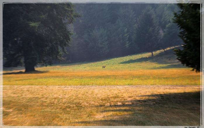redwoods_monastery_2013_214